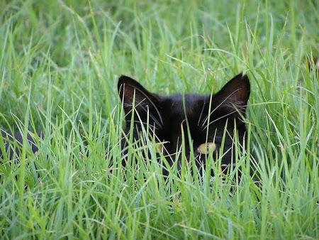 spy_cats_01