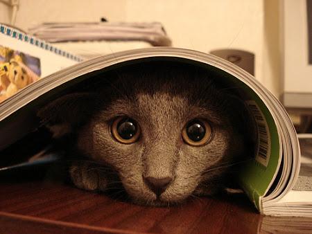 spy_cats_02