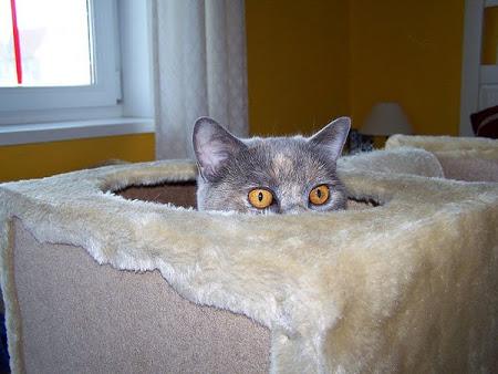 spy_cats_04