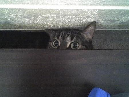 spy_cats_05