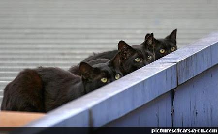 spy_cats_07