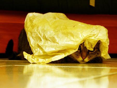 spy_cats_08