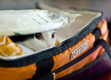 spy_cats_09