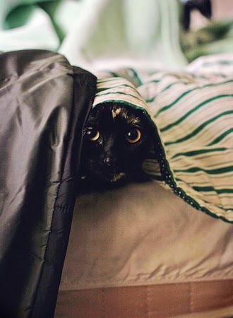 spy_cats_10