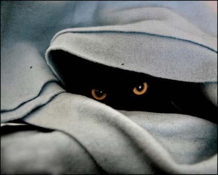 spy_cats_12