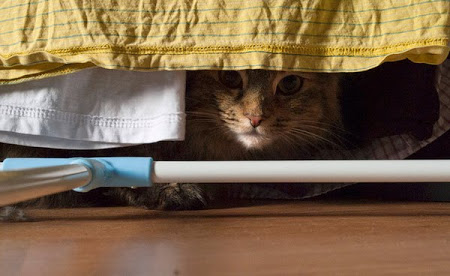 spy_cats_13