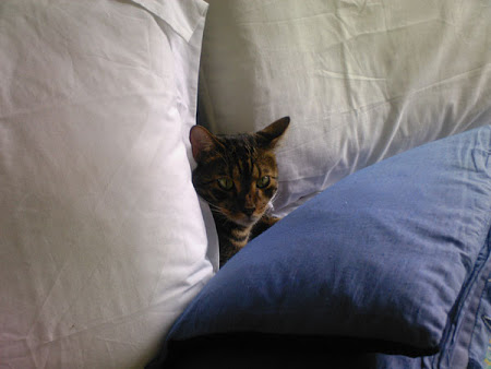 spy_cats_15