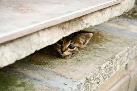 spy_cats_16