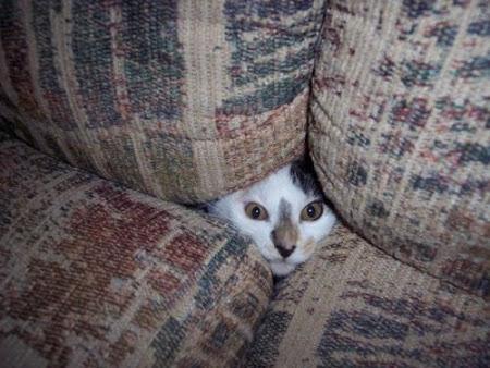 spy_cats_19