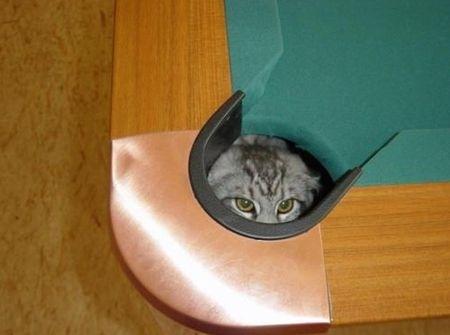 spy_cats_21