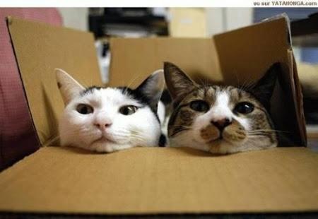 spy_cats_29